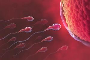 Các cách tính ngày rụng trứng để sinh con trai chuẩn nhất